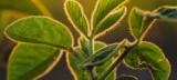 Οι επιστήμονες βρήκαν τρόπο να κάνουν «τούρμπο» τη φωτοσύνθεση τωνφυτών