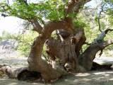 Το δάσος και ταδέντρα