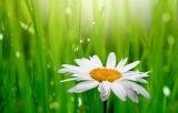 Ευρωπαϊκό σήμα οικολογικών προϊόντων (eu eco label – ecoflower)