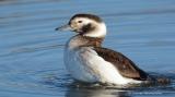 Φιλόξενο καταφύγιο από τη βαρυχειμωνιά βρήκαν σπάνια πουλιά στο ΔέλταΑξιού