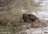 Aπαγόρευση του κυνηγιού σε όλη την Επικράτεια λόγω των δυσμενών συνθηκών ζητάει η ΟρνιθολογικήΕταιρεία