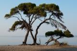 Αυθαίρετη δόμηση στον αιγιαλό του Εθνικού Πάρκου Σχινιά –Μαραθώνα