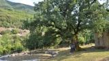 Τα «ιερά δέντρα» της Ηπείρου, φιλόξενο καταφύγιο για πολλά είδη…μυρμηγκιών