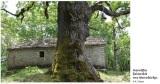 Στην άυλη κληρονομιά της Unesco τα ιερά δάση Κόνιτσας καιΖαγορίου