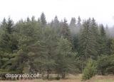 WWF: Πάνω από το 50% των φυσικών περιοχών της Ευρώπης προστατεύεται μόνο σταχαρτιά