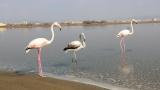 Μια «νότα» ροζ στη λιμνοθάλασσαΚαλοχωρίου!