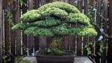 Αν είχαν φωνή τα δέντρα ή το μυστικό ενόςμπονσάι