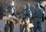 Επιπλέον 600.000 πάπιες θα θανατωθούν εξαιτίας της εξάπλωσης του ιού της γρίπης των πτηνών στηΓαλλία