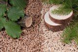 Παραγωγή pellets στην Ελλάδα και διαθέσιμη πρώτη ύλη από την δασικήβιομάζα