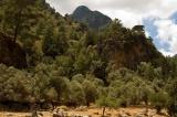 Διεύθυνση Δασών Χανίων: Δελτίο Τύπου για την Παγκόσμια Ημέρα τηςΔασοπονίας