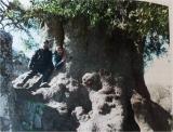 Με το μεγαλύτερο πουρνάρι και το αρχαιότερο ελαιόδεντρο, η Ελλάδα γιορτάζει την Παγκόσμια ΗμέραΔασών