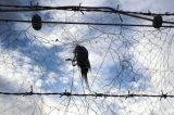 Tα αμπελοπούλια της Κύπρου σεκίνδυνο