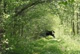 Μπιαλοβιέζα (Białowieża), τo δάσος πουαγάπησα