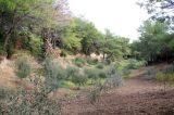 Ψηφίστηκε από ΣΥΡΙΖΑ – ΑΝΕΛ το νομοσχέδιο για τους δασικούςχάρτες
