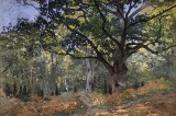 Τάξη στα δάση και έννομητάξη