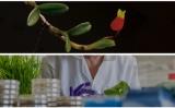 Ο παγκόσμιος «Άτλαντας» των φυτών εμπλουτίσθηκε με 1.730 νέα είδη το2016