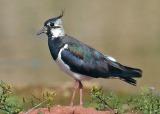 Όλο και λιγότερα πουλιά στηνΕυρώπη