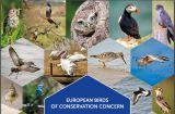 Νέα δημοσίευση: Ευρωπαϊκός Κατάλογος ΔιατήρησηςΠουλιών
