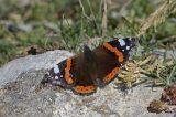 Στις Πρέσπες μία από τις μεγαλύτερες συγκεντρώσεις πεταλούδων στηνΕυρώπη