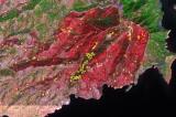 Διημερίδα του Εθνικού Παρατηρητηρίου Δασικών Πυρκαγιών(ΕΠαΔαΠ)