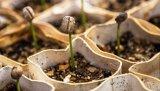 Τα φυτά έχουν «εγκεφάλους» που αποφασίζουν πότε ναβλαστήσουν