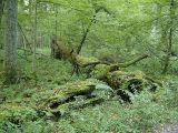 UNESCO: Σταματήστε την υλοτόμηση στο τελευταίο αρχέγονο δάσος τηςΕυρώπης