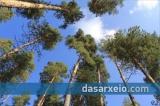 Ομάδα εργασίας για τις νέες προδιαγραφές των δασικών διαχειριστικώνμελετών