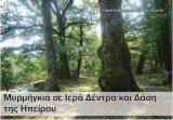 Μυρμήγκια σε Ιερά Δέντρα και Δάση τηςΗπείρου
