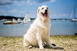 Σκύλος βούτηξε στα νερά του Λονγκ Άιλαντ και έσωσεελαφάκι