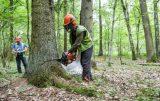 Η Πολωνία συνεχίζει την υλοτόμηση σε αρχέγονο δάσος, μνημείο τηςUnesco