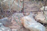 Πρόσφατες επιτυχίες της Ομοσπονδιακής Θηροφυλακής στηνΚρήτη