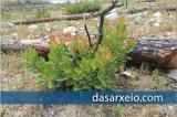 Π. Κωνσταντινίδης: Το κάθε δάσος έχει ένα πολύ μεγάλο αριθμό αναγεννητικώνδυνάμεων