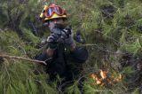 Πολλά άγρια ζώα πέθαναν στις δασικέςπυρκαγιές