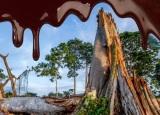 Αποψίλωση των δασών και απώλεια ενδιαιτημάτων λόγω της βιομηχανίαςσοκολάτας