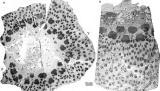 Βρέθηκαν απολιθώματα των αρχαιότερων δέντρων στηΓη