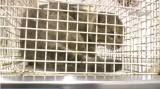 Απελευθερώθηκε ο φουρόγατος στα ΛευκάΌρη