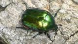 Γιατί ψοφούν τα έντομα στηΓερμανία;