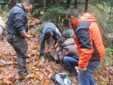 Μια αρκούδα ήταν πιασμένη σε παγίδα-θηλιά. Άμεση παρέμβαση και απελευθέρωσητης
