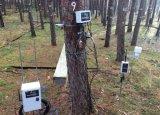 Τα δέντρα… χρησιμοποιούν το Twitter για να «μαρτυρήσουν» τις συνέπειες της κλιματικής αλλαγής πάνωτους