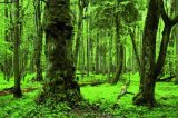 Διατήρηση φυσικών οικοτόπων κατά το δίκαιο της Ευρωπαϊκής Ένωσης. Έγκριση σχεδίων διαχείρισης – Προστασία του δάσους τηςBiałowieża