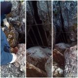 Ενημέρωση για την επανεμφάνιση αρκούδας στην ΑναρράχηΕορδαία