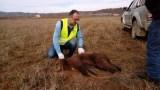 Άσχημο ποδαρικό του έτους για την άγρια πανίδα με νεκρόαρκουδάκι