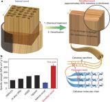 Ξύλο γερό σαν ατσάλι δημιούργησαν ερευνητές στιςΗΠΑ
