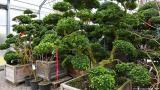 Φυτά… προς ενοικίαση