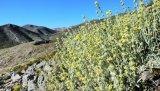 Από την ανεξέλεγκτη συλλογή απειλούνται τα αρωματικά και φαρμακευτικά φυτά τηςΚρήτης