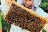 Ένα μέλι «χρυσός»