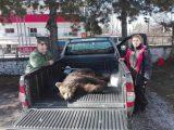 Βρέθηκε νεκρό αρκουδάκι κοντά στηΚοζάνη