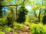 Δ/νση Δασών Πιερίας: Δελτίο τύπου για την Παγκόσμια ΗμέραΔασοπονίας