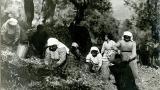 Η έκθεση «Διδάσκοντας την ελαιοκομία» στο Πολιτιστικό Ίδρυμα του ΟμίλουΠειραιώς